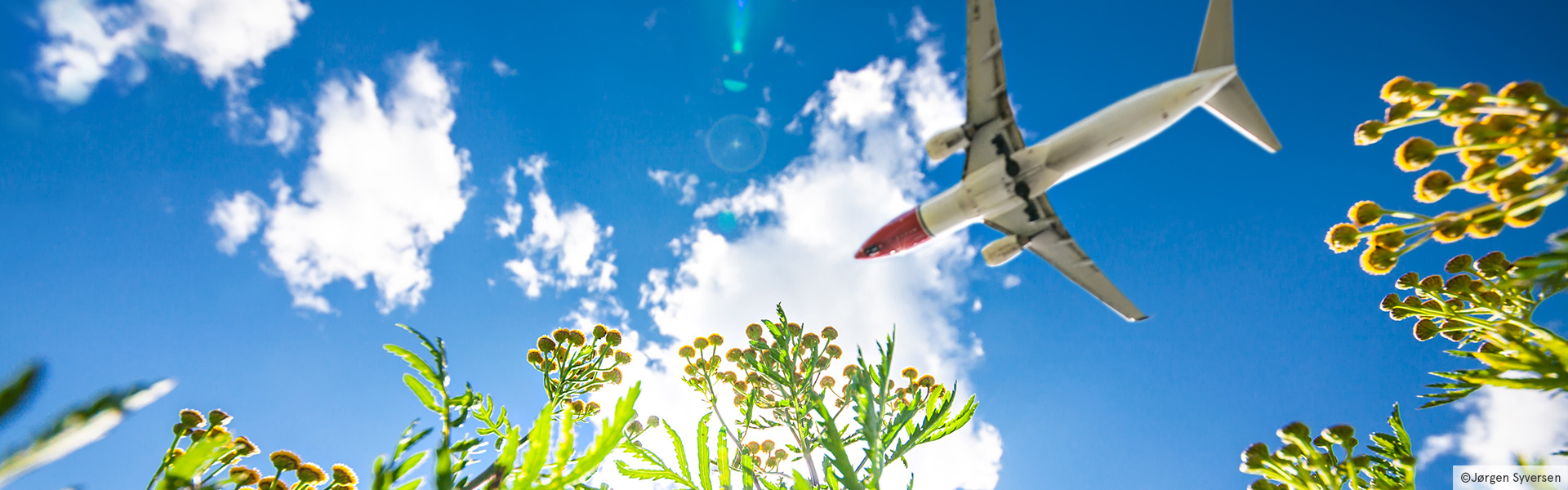 Norwegian plane flying over green flowers